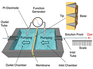 Chemical Sensing and Chemoresponsive Pumping with Conical-Pore Polymeric Membranes