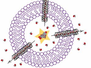 Water-ion permselectivity of narrow-diameter carbon nanotubes